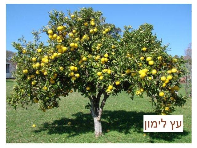 עץ לימון by Neuron d3