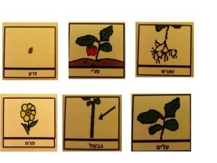 משחק 7 by מיכל ראובן