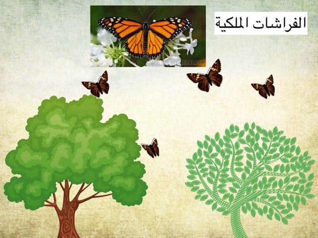 لعبة الفراشات by Ahmad ahmad