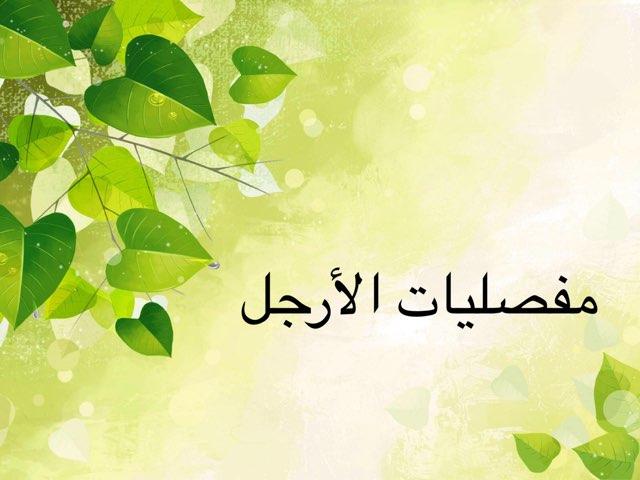 مفصليات الأرجل by Huda Hussain