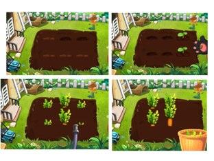 גידול גזרים בגינה by Sara Zigelbaum
