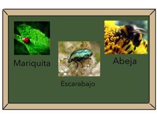 Insectos 5 Años!! by AR LOPEDEVEGA