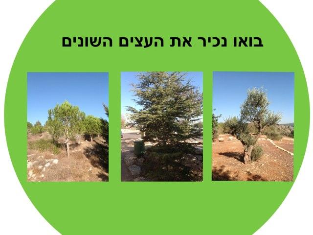 הכרת סוגי עצים by Dana Benyehuda