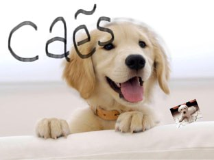 Cão E Gato by Renato junior
