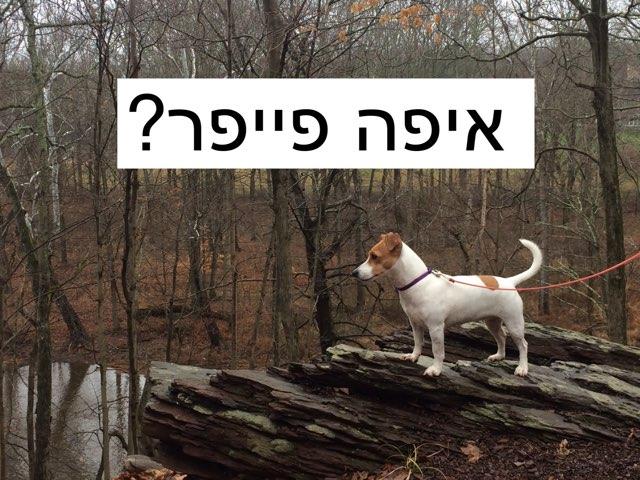 איפה פייפר? by Gideon Fruchter