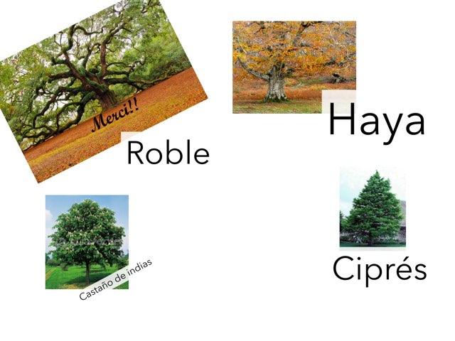 Árboles  by Curso CFTIC