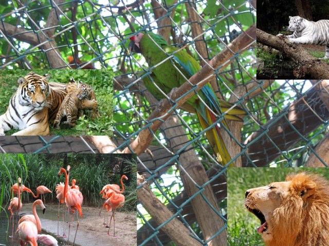 Zoológico  by Marina Bernardo