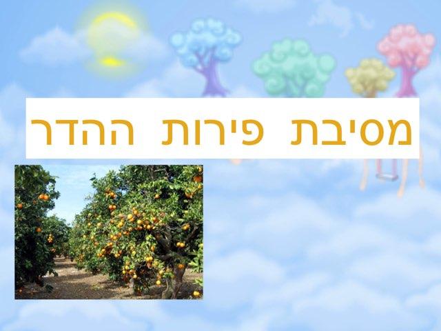 מסיבת פירות ההדר by esty Tzivion