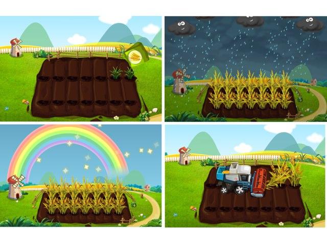 תהליך גידול חיטה בשדה by Sara Zigelbaum