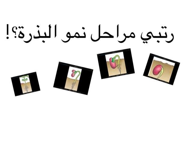 مراحل البذره by Fajer Alsaeedi