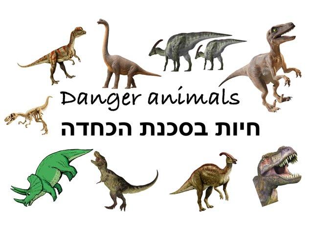 אראל- חיות בסכנת הכחדה by Netaaya Schwartz