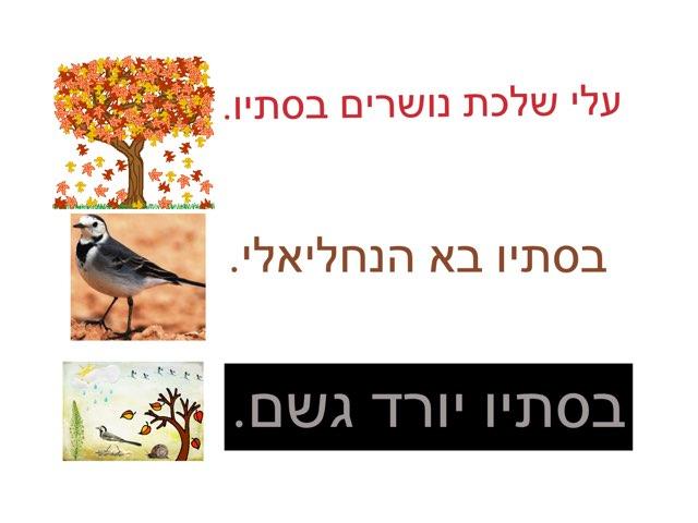 סתיו גדי by Nadine Lasry