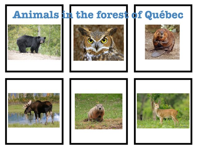 Animals In the Forest Of Québec by Vicky Bergeron