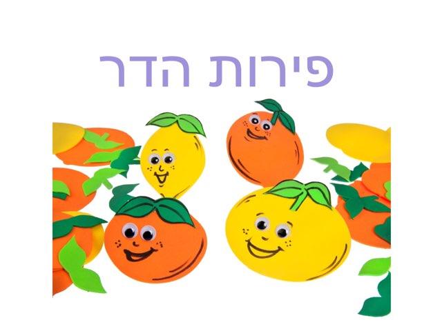 פירות הדר by סופיה גל