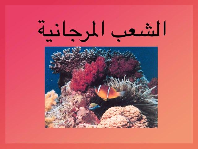 تقرير الشعب المرجانية  by Kmoze 02