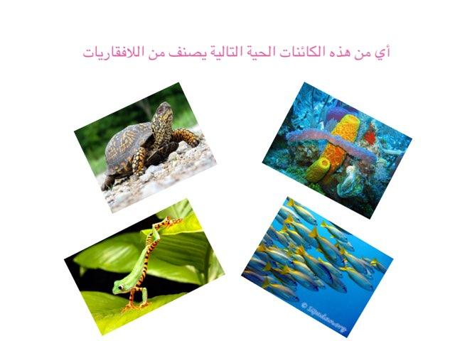 لعبة 16 by Seham Mohammed