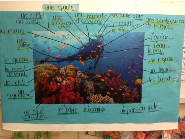 Le Récif Corallien  by Natalie Stewart