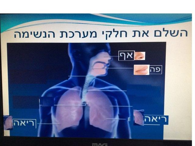 מערכת הנשימה by אורטל בן לולו