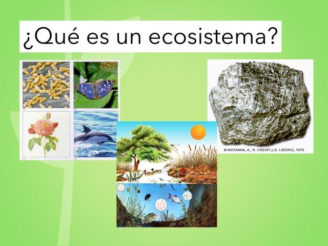Los Ecosistemas Vimase by CRA LAS CAÑADAS Aguilafuente