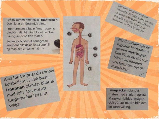 Matens väg genom magen by Maria lindqvist