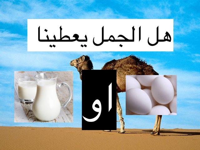 الجمل by حمودي الشهري