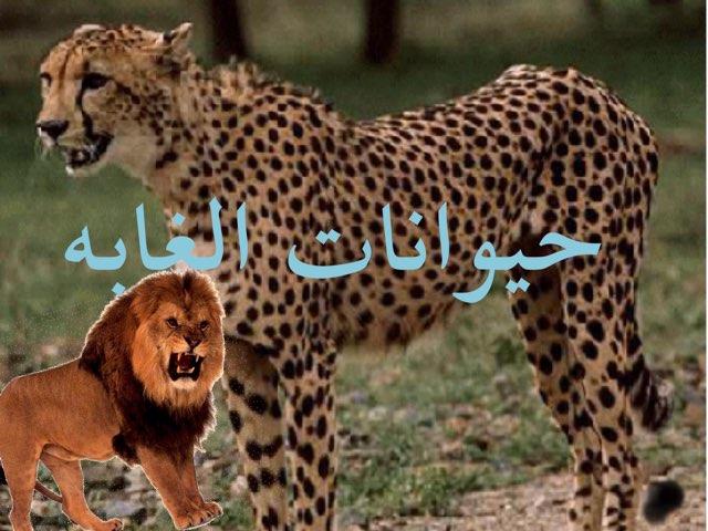 משחק 8 by איאד עקאד
