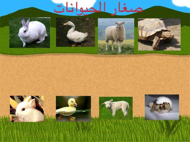 صغار الحيوانات by Reem Adel