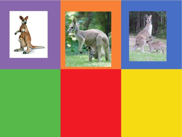 משחק 22 הקנגורו של ליאן by Mor Shapira