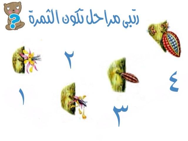 مراحل by Mai Al