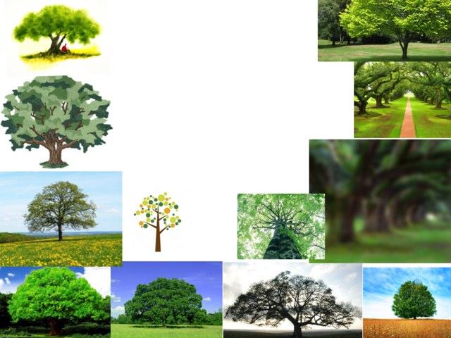 Árvores E Suas Curiosidades by Marina Bernardo