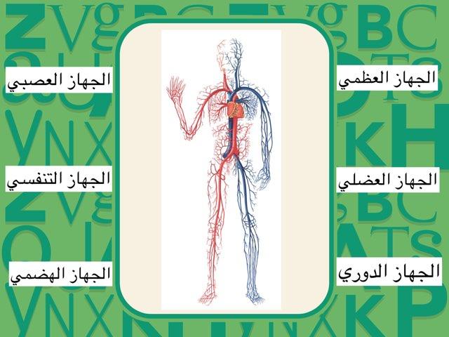 أجهزة الجسم١ by Fatma Al-Ameer