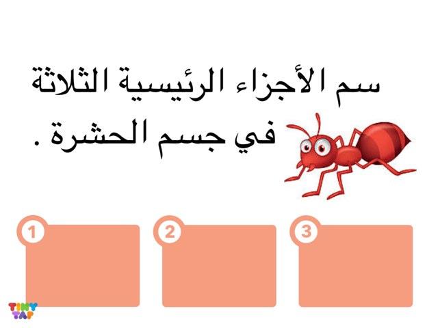 الحشرات by Done Done