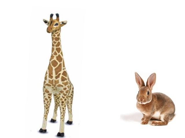 חיות by Sapir Ke
