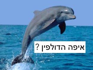 איפה הדולפין ? משחקים לקראת הקיץ by Meirav Mines Amar