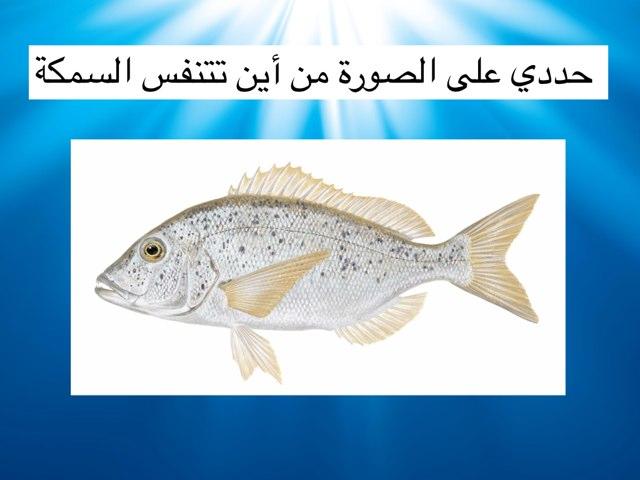 لعبة 17 by Noura Alfandi