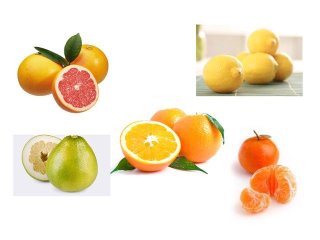 פאזל פירות הדר וחלקי העץ by אורית טדלה