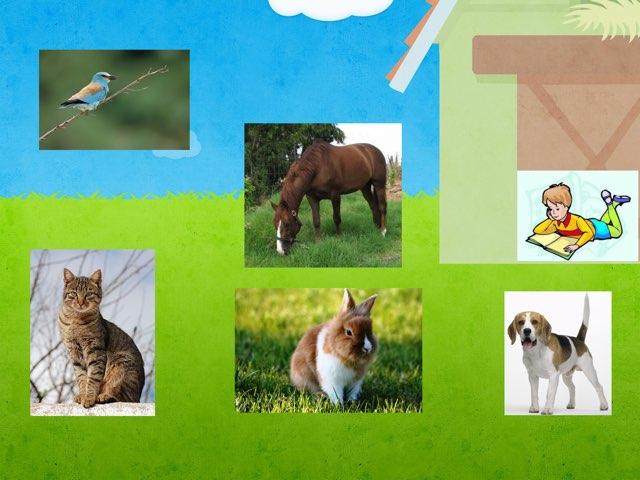 בעלי החיים ומזונם by Liar levy