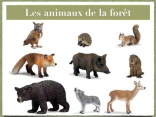 Les Animaux De La Forêt by Florence Latour