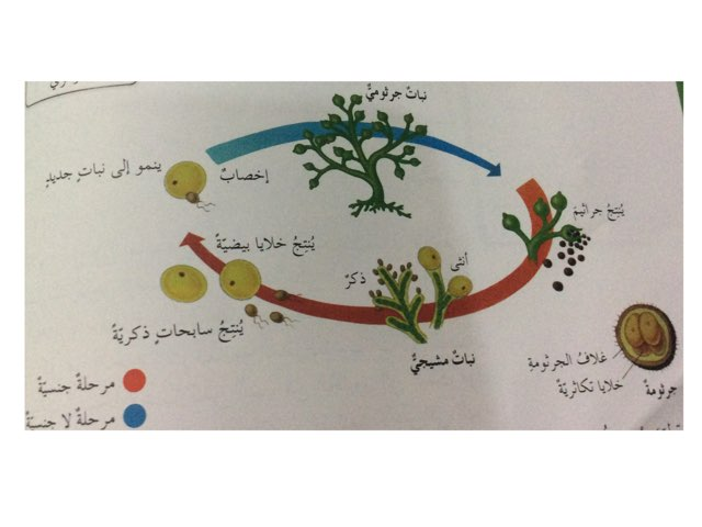 دورة حياة ١ by Ahmad ahmad