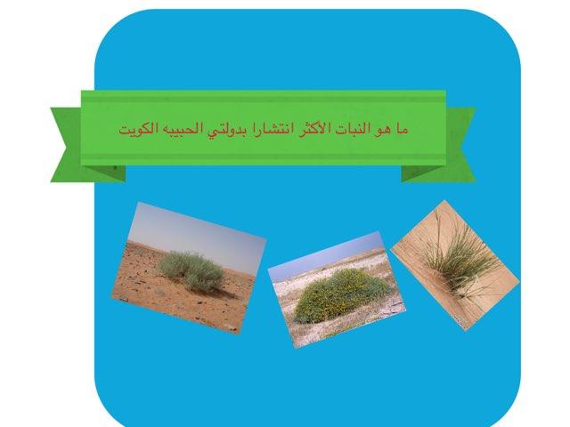 النبات  by Nad Alnad