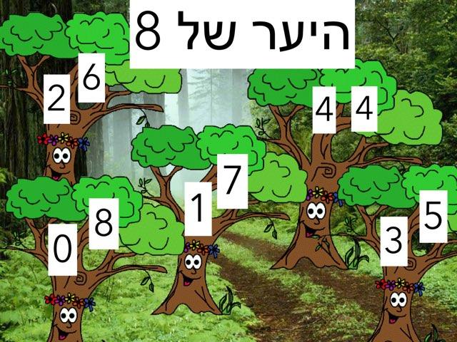 היער של שמונה by Sara Zigelbaum