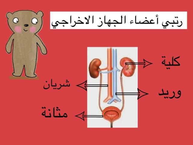 ازالة الفضلات من الدم by Mai Al