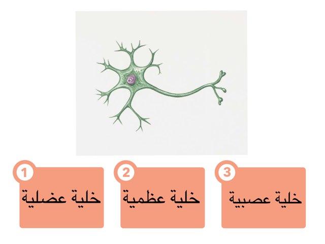 تصنيف الخلايا والأنسجة by Fatma Al-Ameer