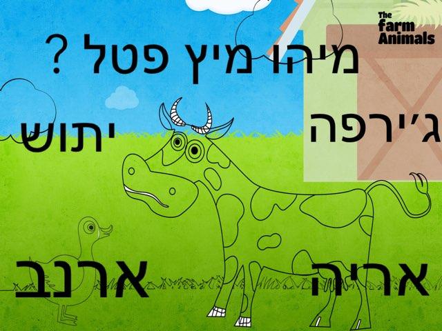 משחק 191 by הדר זיסמן