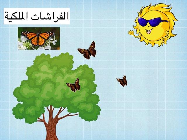 الفراشات الملكية by Ahmad ahmad