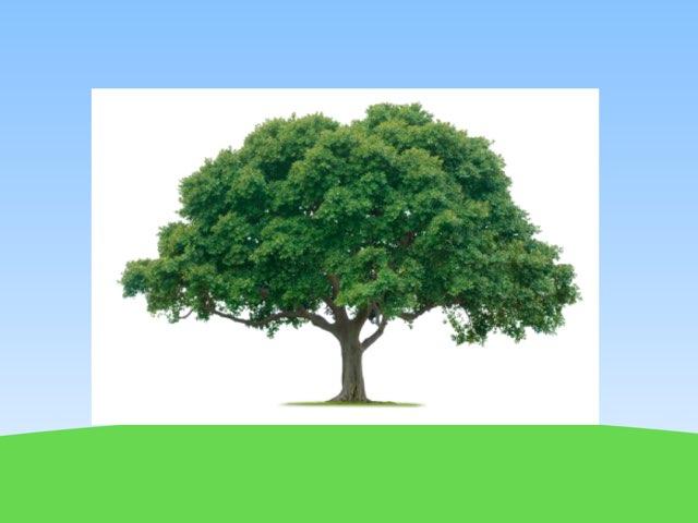 העץ וחלקיו שאלון זיהוי סמלים by Efrat Ilan