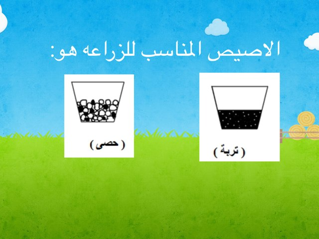 ماذا يحتاج النبات by abla ohoud