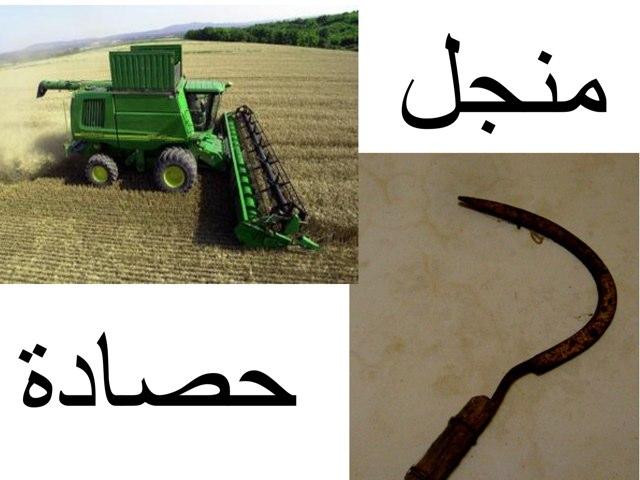 القمح by Hadool KJ