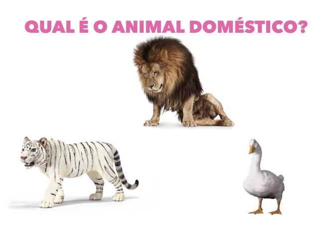 ANIMAIS DOMÉSTICOS E SELVAGENS by porto morumbi