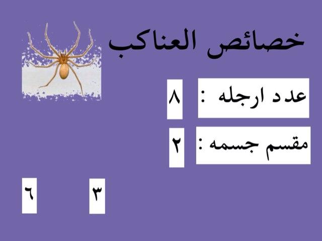 العناكب والحشرات by Reem Adel